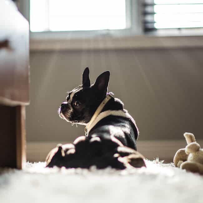 Paws Pet Care